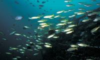 Морская экосистема